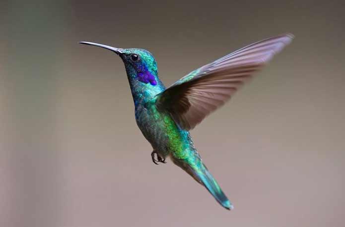 hummingbird google seo imagina